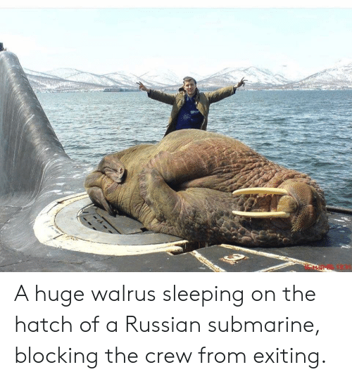 a-huge-walrus-sleeping-on-the-hatch-of-a-russian-46559805.png